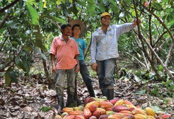 participar concurso cacao de oro